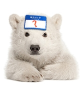 Winter 2014 Bear Sidebar Name Contest - Version 2 - Cropped